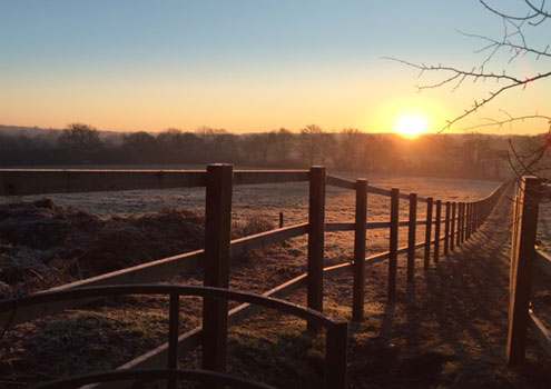 Frosty-in-Horsham-Sussex